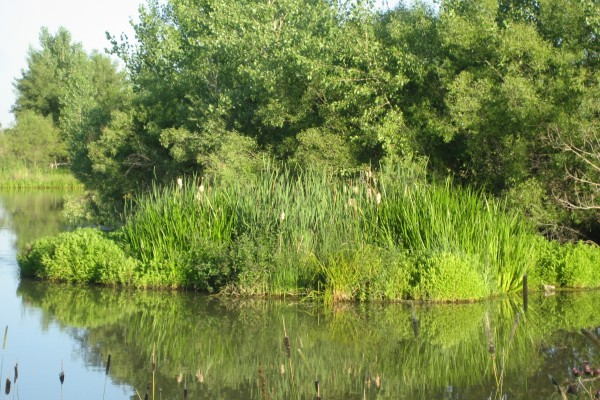 Biohaven water quality improvements