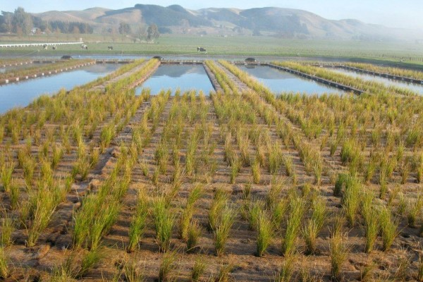 Wastewater Treatment & SuDS