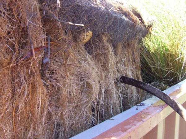 wetlands research paper A study of the role of coastal wetlands in reducing the severity of impacts from   thatch for roofing, fibres for textiles and paper making, and timber for building.