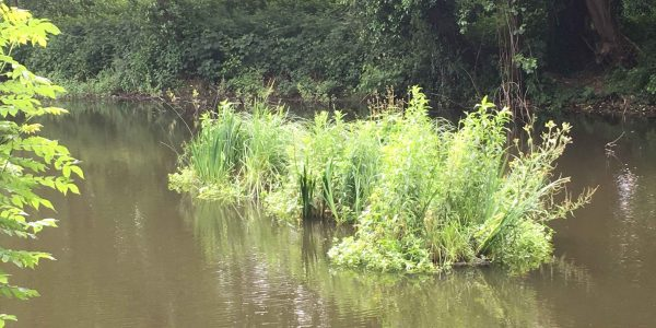 Biohaven-floating-island-fully-vegetated